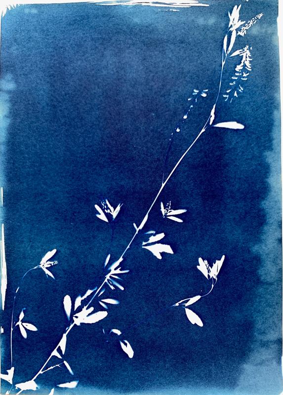 Cyanotype (analogue)